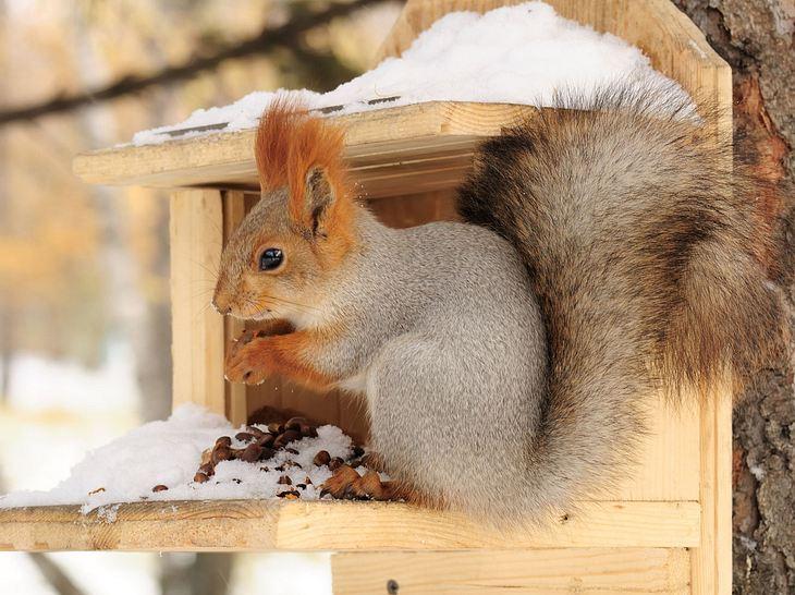 Eichhörnchen füttern: Was Sie wissen sollten