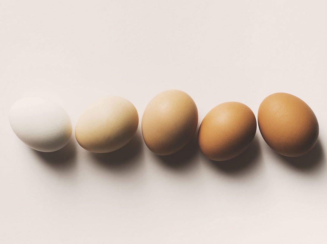 Die große Eierkunde: Fragen und Antworten rund ums Ei