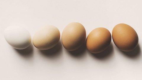 Die große Eierkunde: Was Sie über Eier wissen sollten