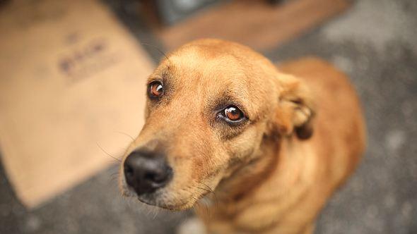 Epilepsie beim Hund: Erste Anzeichen richtig deuten