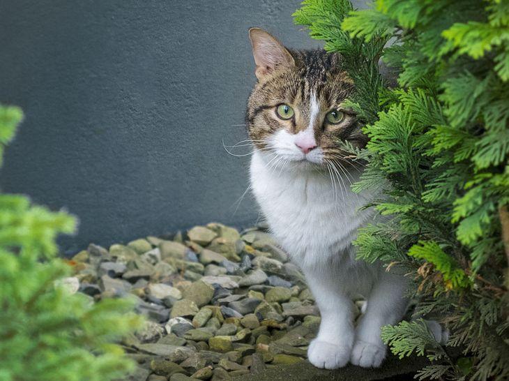 Wie erste Hilfe bei Katzen geleistet werden kann.