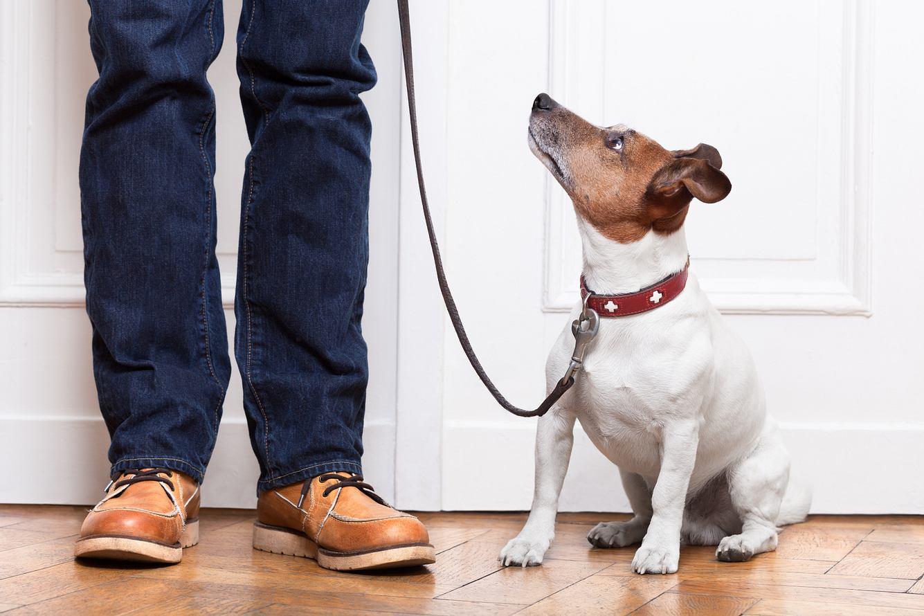 Hund mit Erziehungshalsband und Herrchen