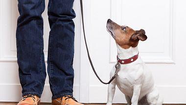 Hund mit Erziehungshalsband und Herrchen - Foto: iStock/damedeeso