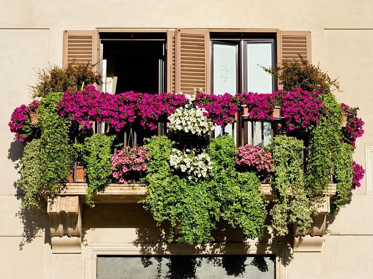 Später Farbenzauber für Balkon & Terrasse
