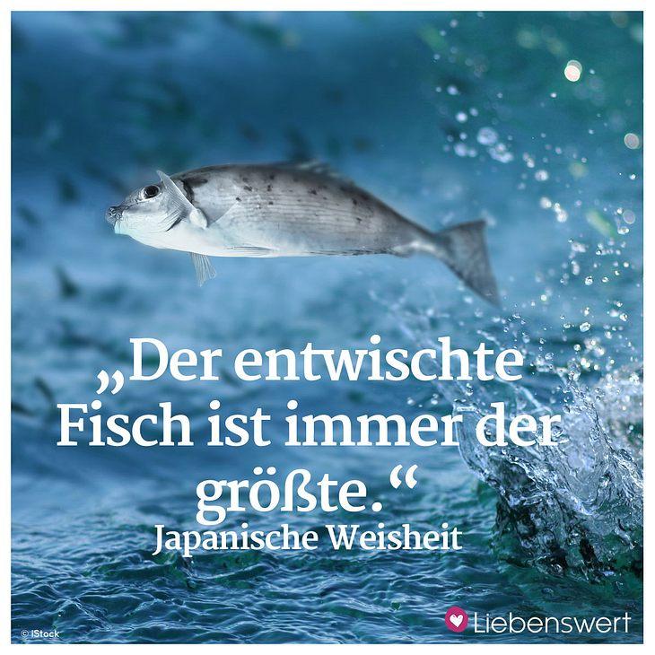 Fisch Lachs