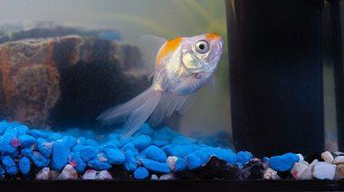 Fische für Anfänger