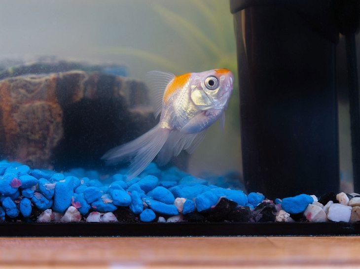 Welche Fische für Anfänger geeignet sind.
