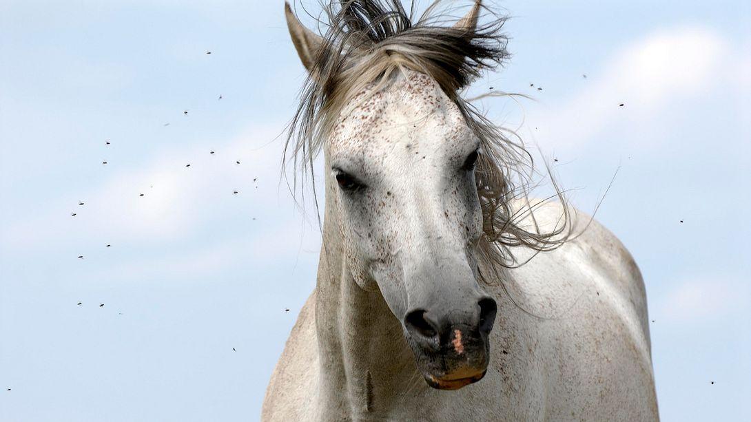 Fliegenspray Pferd - Foto: iStock/markusloew