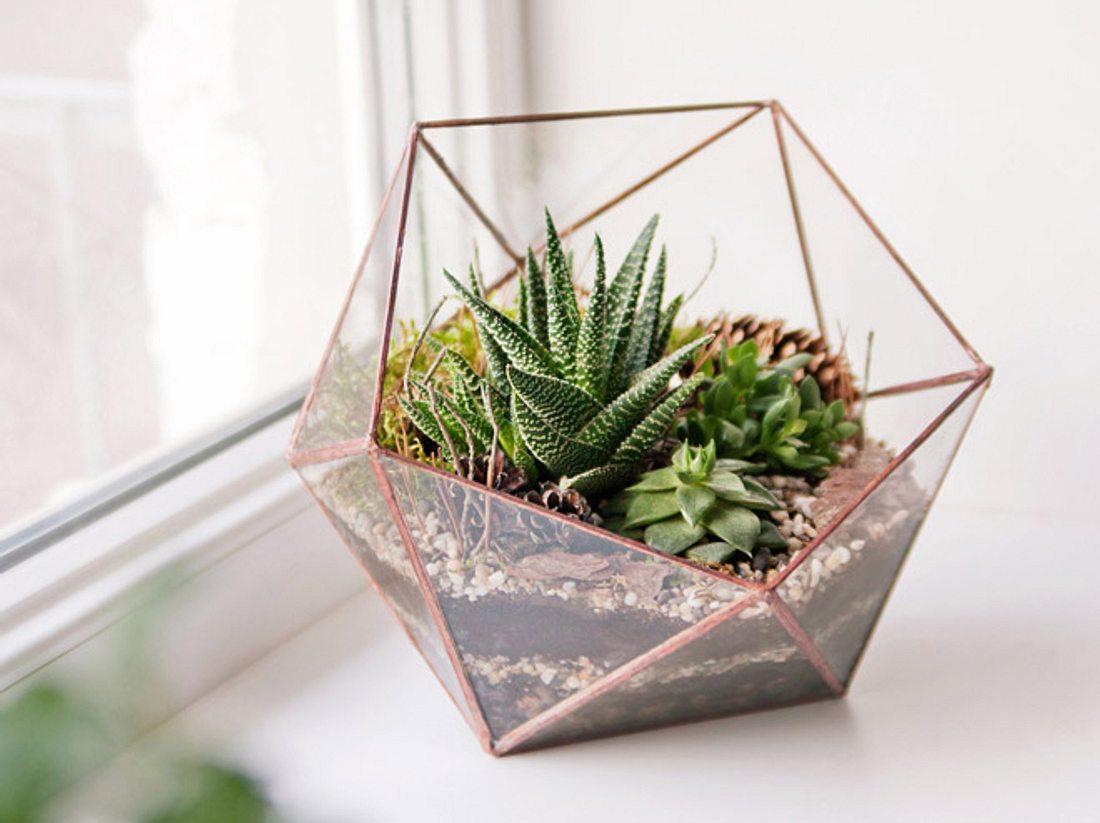 Florarium: So gestalten Sie ihr Pflanzen-Terrarium.