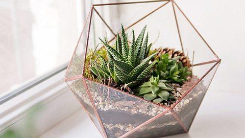Florarium: So gestalten Sie ihr Pflanzen-Terrarium. - Foto: dinachi