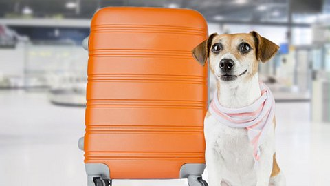 Hund am Flughafen - Foto: Fly_dragonfly/iStock