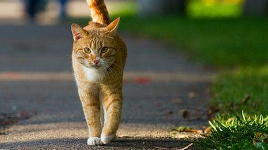 Freigänger: Katze sicher nach draußen lassen - Foto: dontsov / iStock