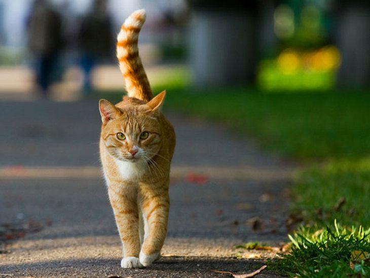 Freigänger: Katze sicher nach draußen lassen