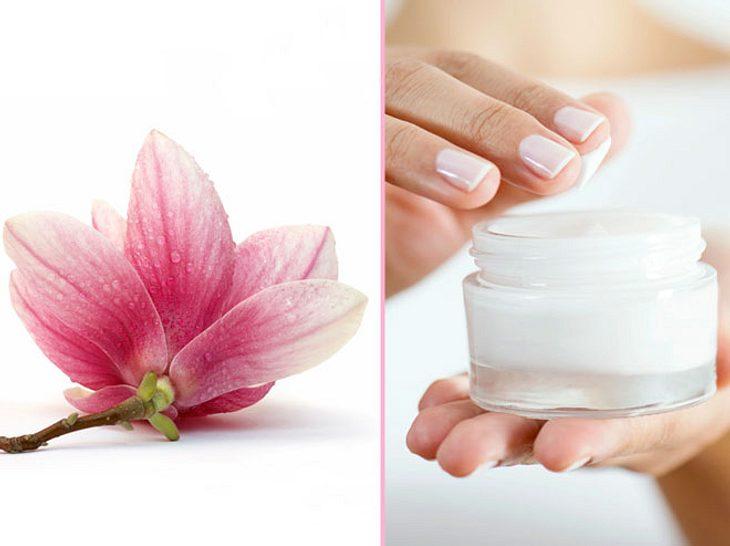 In der Magnolie sind wohltuende Stoffe enthalten.