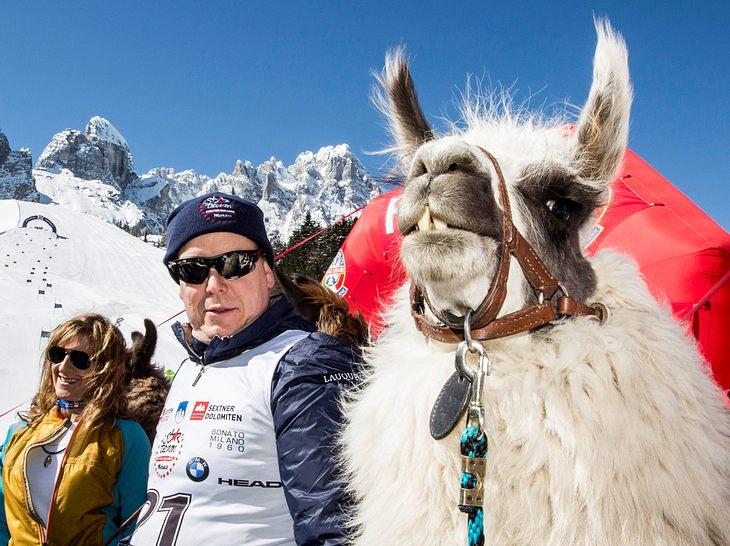 Fürst Albert neben einem Lama bei einem wohltätigen Zweck.