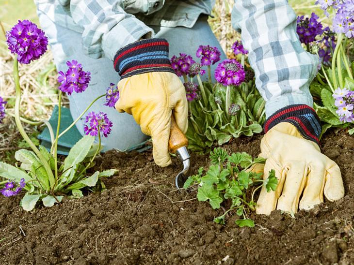 Gartenplaner Unkraut jäten
