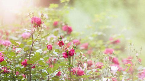 Was Ihre Geburtsblume verrät