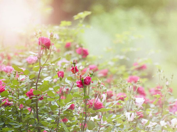 Was Ihre Geburtsblume verrät?