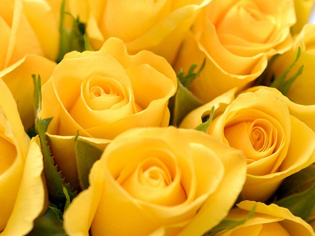 Was bedeuten gelbe Rosen?