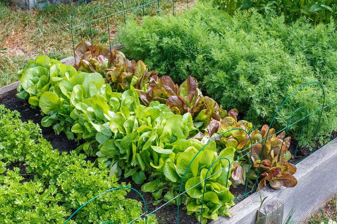 Mit etwas Planung können Sie schon bald das erste Gemüse aus Ihrem eigenen Garten ernten.
