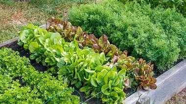 Gemüsebeet anlegen: Tipps und Ideen für die Planung