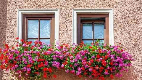 Üppig blühen Geranien in Balkonkästen. - Foto: iStock /eli_asenova