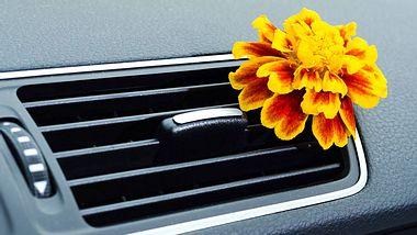 Gerüche aus dem Auto entfernen