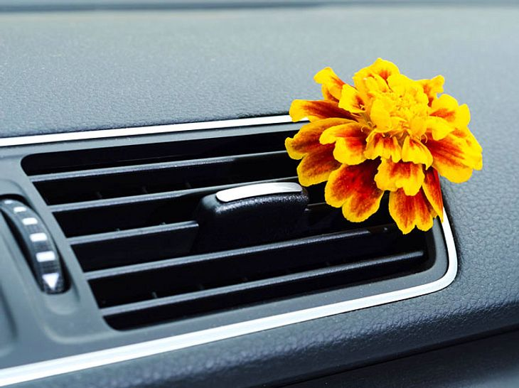 Welche Geruchsneutralisierer eignen sich für den Einsatz im Auto?