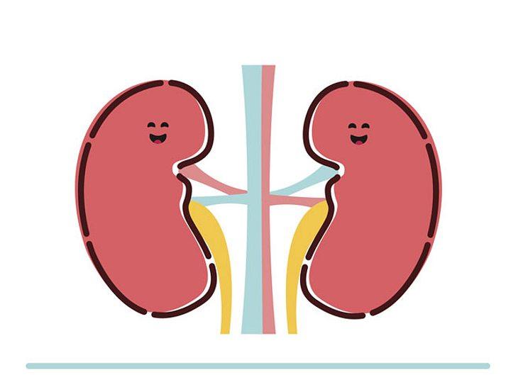 Um Ihre Nieren fit zu halten, sollten Sie einige Dinge beachten.