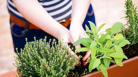 Heilpflanzen vom Balkon