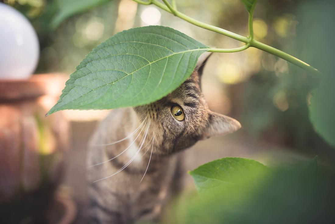 Eine neugierige Katze riecht an einem Pflanzenblatt.
