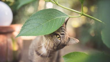 Eine neugierige Katze riecht an einem Pflanzenblatt. - Foto: Nils Jacobi / iStock