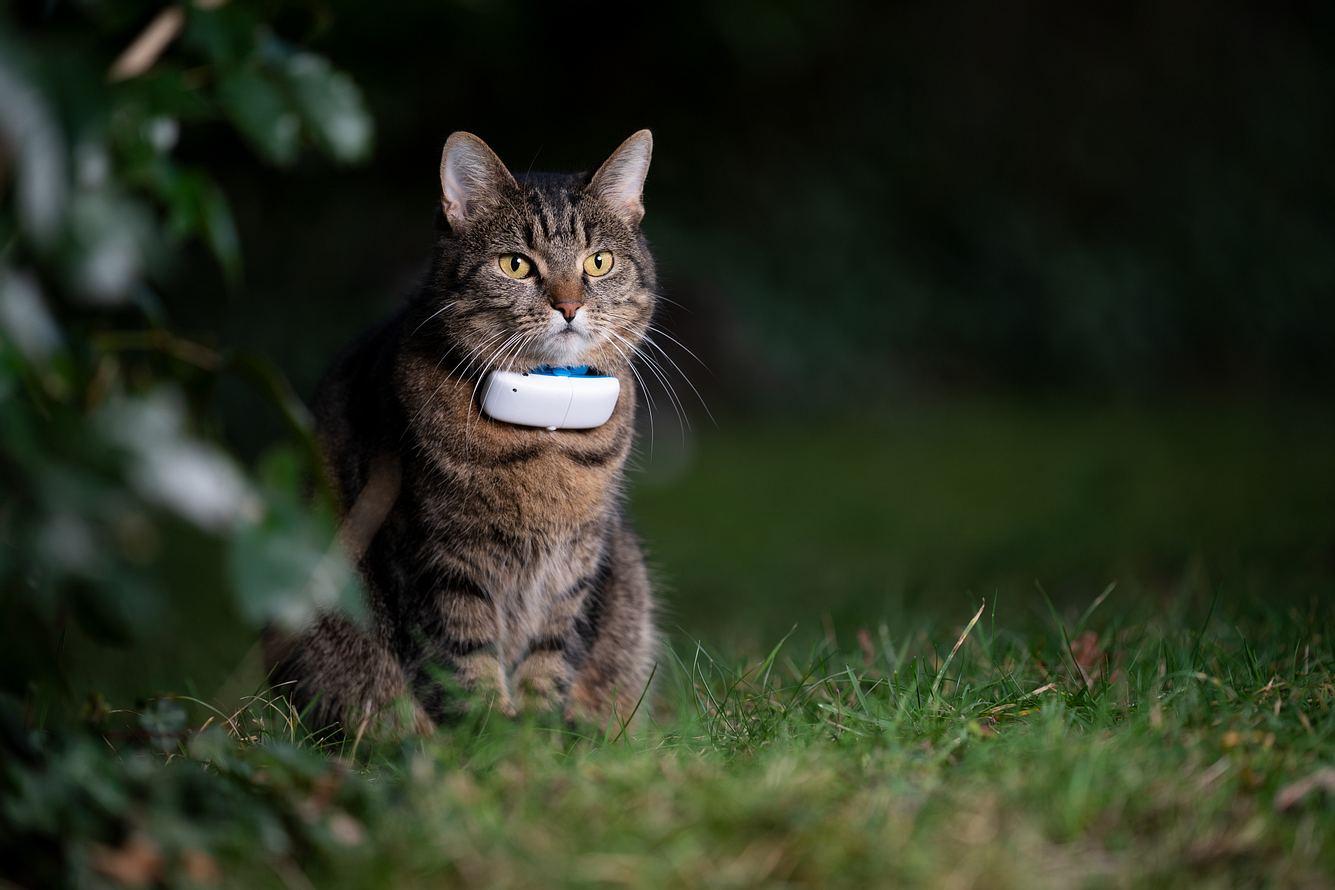 Haustier trägt GPS Tracker für Katzen.