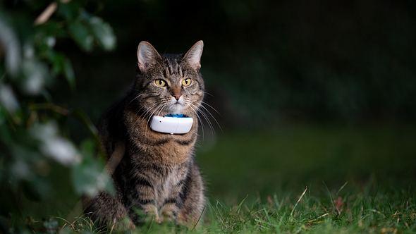 Haustier trägt GPS Tracker für Katzen. - Foto: iStock/ Nils Jacobi