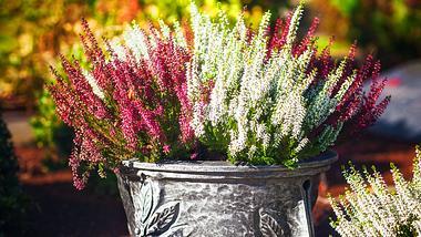 Worauf Sie bei der Grabbepflanzung zum Winter hin achten sollten. - Foto: firina / iStock