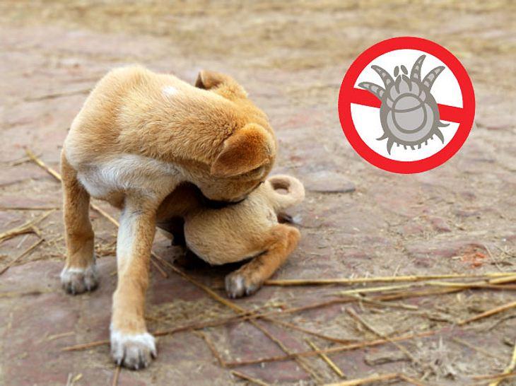 Wir verraten, woran Sie Grabmilben erkennen können und wie Sie den Befall Ihres Haustieres behandeln.
