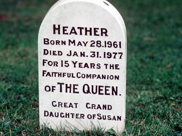 Grabstein für Corgi Heather