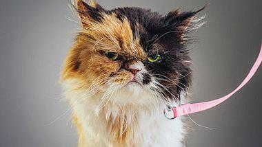 Wenn der Partner keine Tiere mag - Foto: SensorSpot / iStock