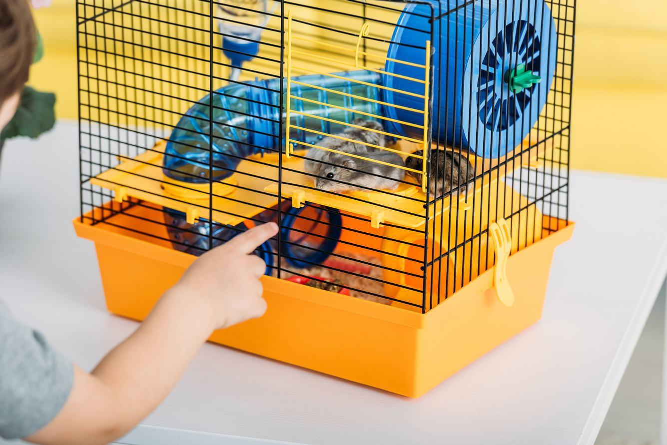 Hamster in einem Hamsterkäfig