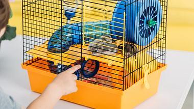 Hamster in einem Hamsterkäfig - Foto: iStock/LightFieldStudios