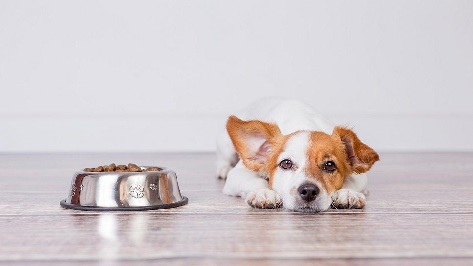 Hanföl für Hunde - Foto: iStock/Eva Blanco