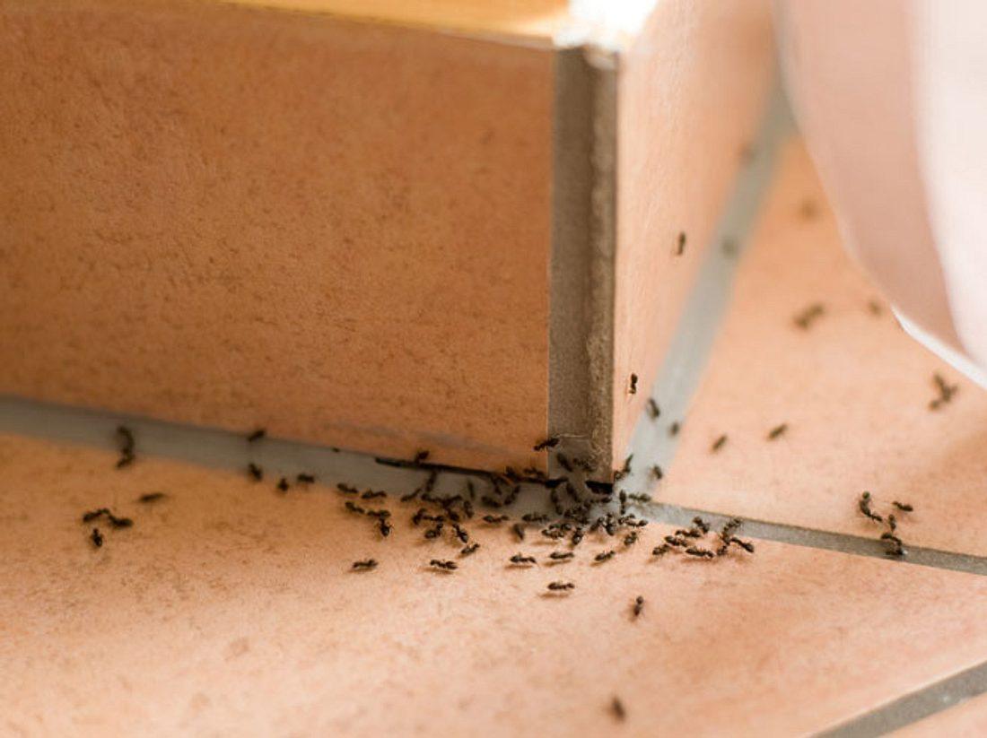 Hausmittel gegen Ameisen, die sofort wirken