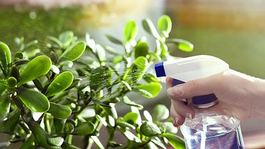 7 effektive Hausmittel gegen Blattläuse