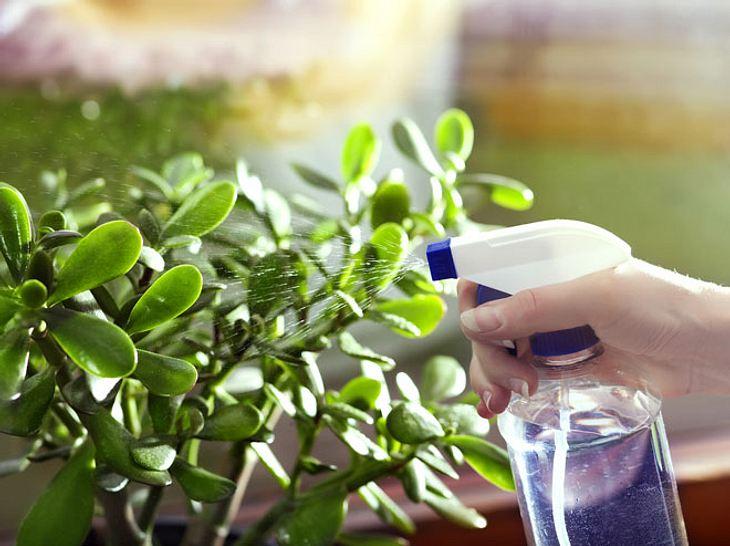 7 Hausmittel, gegen Blattläuse