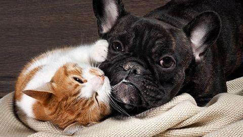 Urlaubsbetreuung für Haustiere