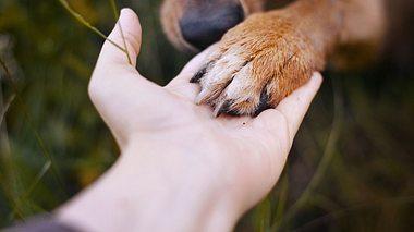 Das Haustier einschläfern lassen