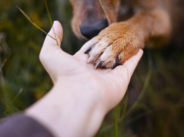 Wann muss ein geliebtes Haustier von seinem Leid erlöst werden?