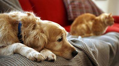Wie trauern Haustiere, wenn Herrchen und Frauchen plötzlich nicht mehr da sind? - Foto: Janie Airey / iStock