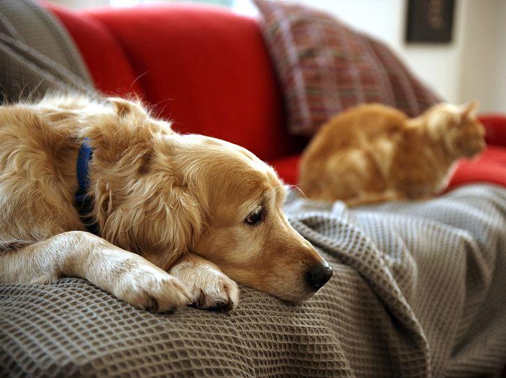 Wie trauern Haustiere, wenn Herrchen und Frauchen plötzlich nicht mehr da sind?