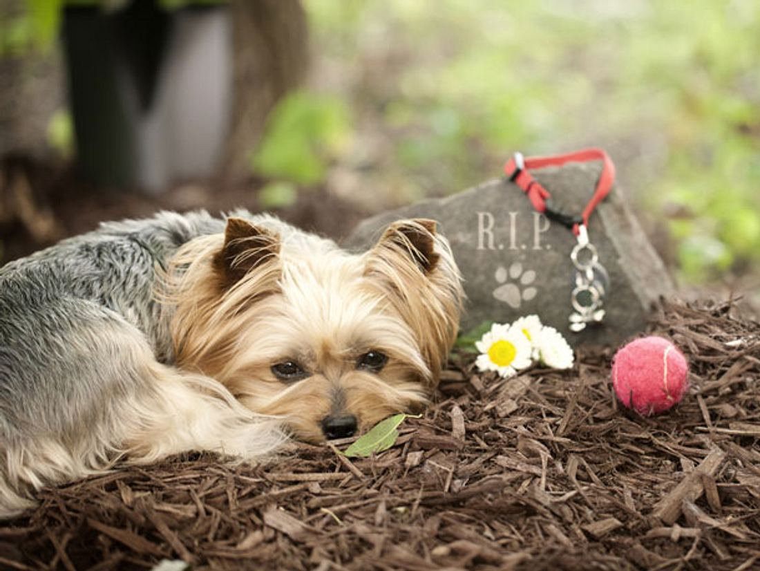 Haustier verstorben - Wie soll ich mit der Trauer umgehen?